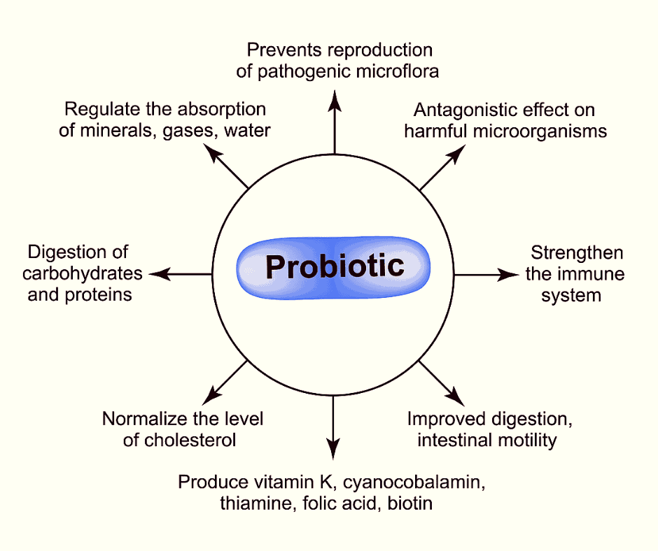 functions of probiotics