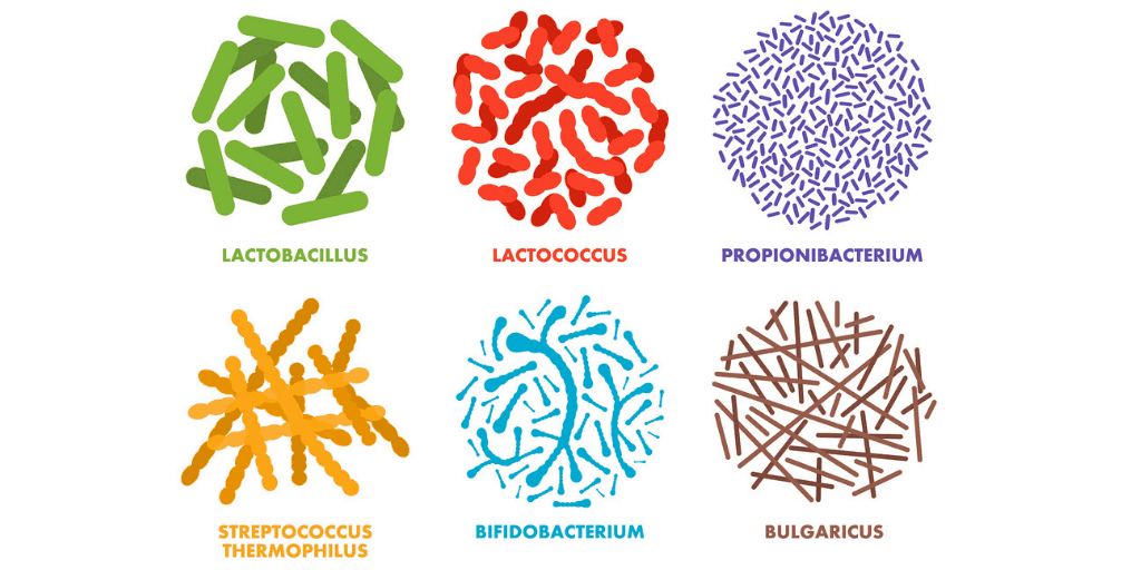 Different probiotic strains