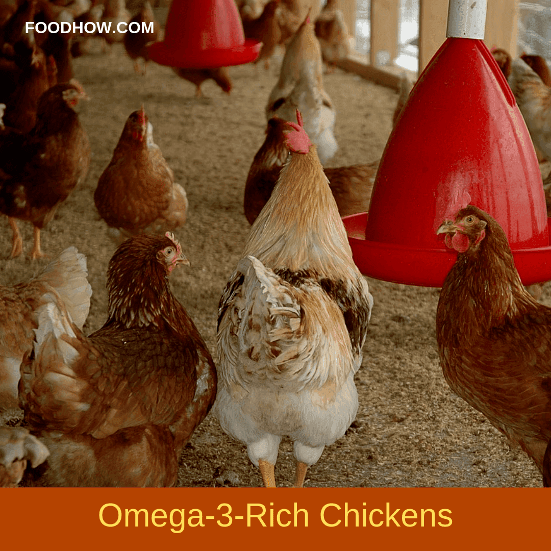 Raising Omega-3-Rich Chicken