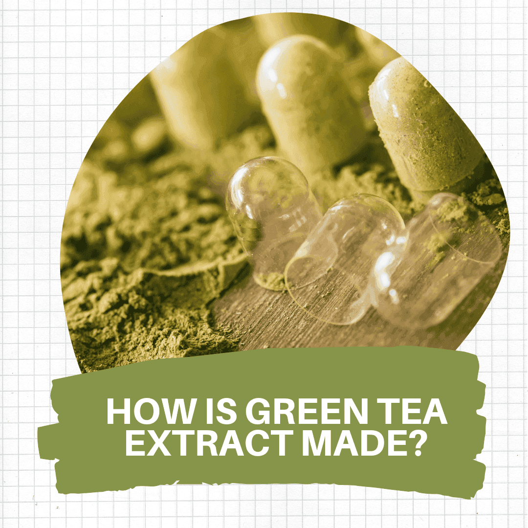 making of green tea extract