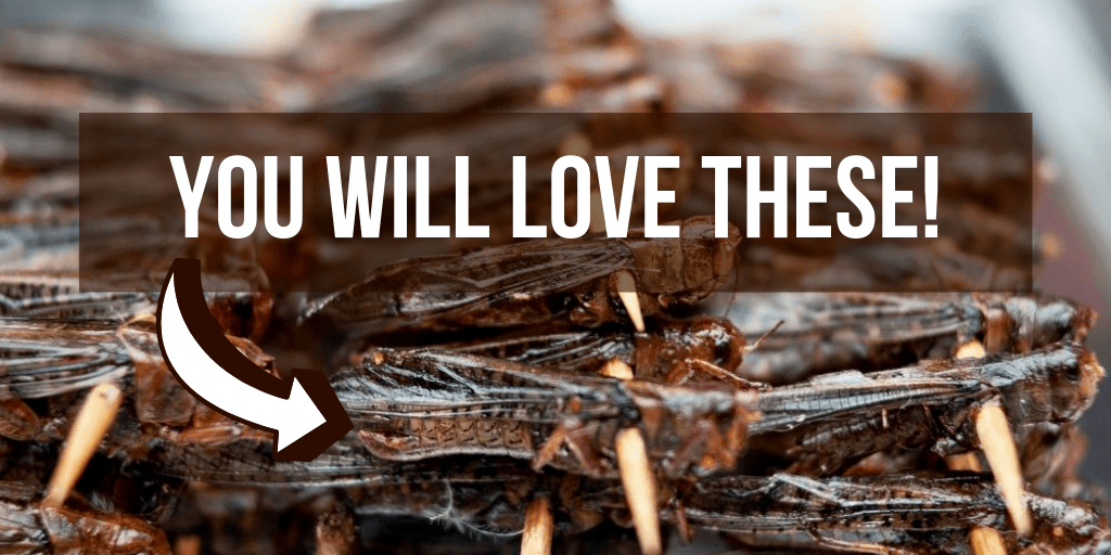 Best Edible Insects and Bugs and The Ones You Should NOT Eat!