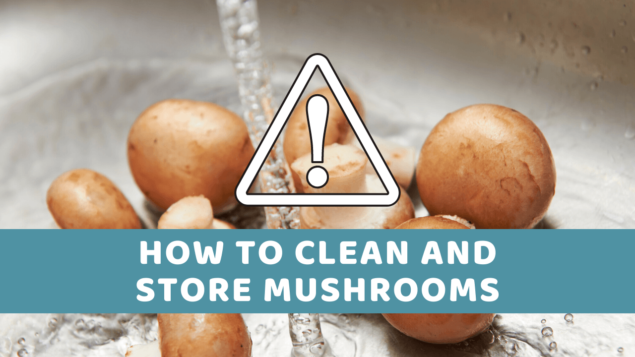 How To Store Mushrooms After Washing? (quick hacks, tips, and tricks)