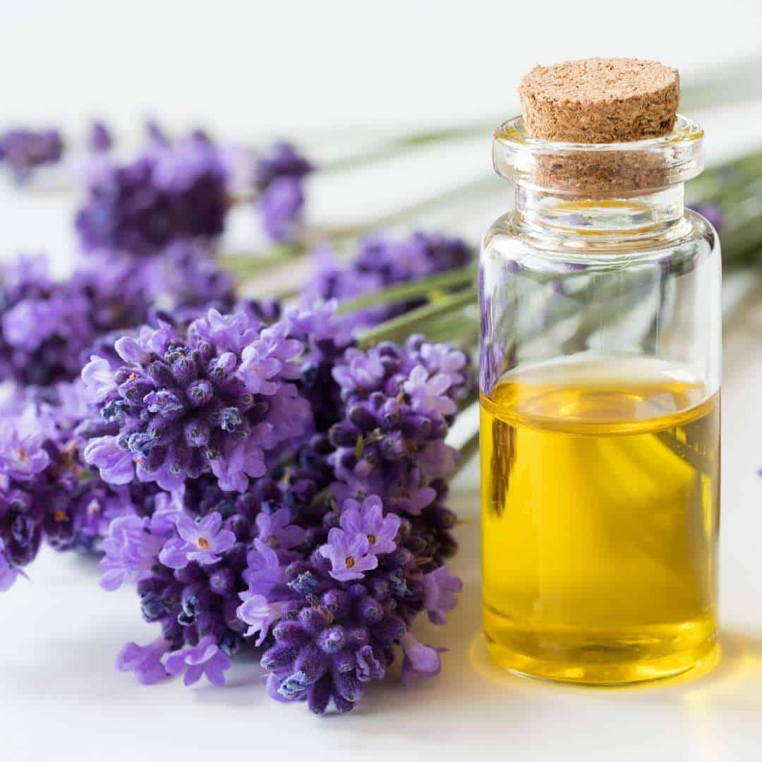 the lavender oil disinfectant derived from nature