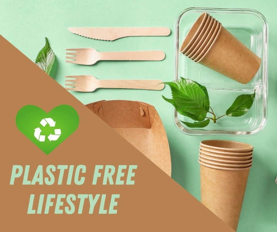 eco friendly food boxes and cups